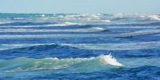 SEA JOURNEY NEW MOON