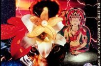 Cosmic Tiger Buddha